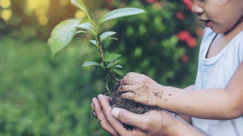 Child Planting In Garden